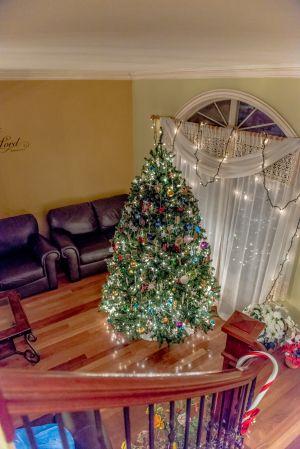ChristmasTree_033.jpg